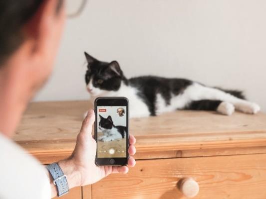 Téléconsultation d'un chat avec un smartphone